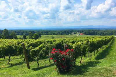 Q&A: The best wineries to visit